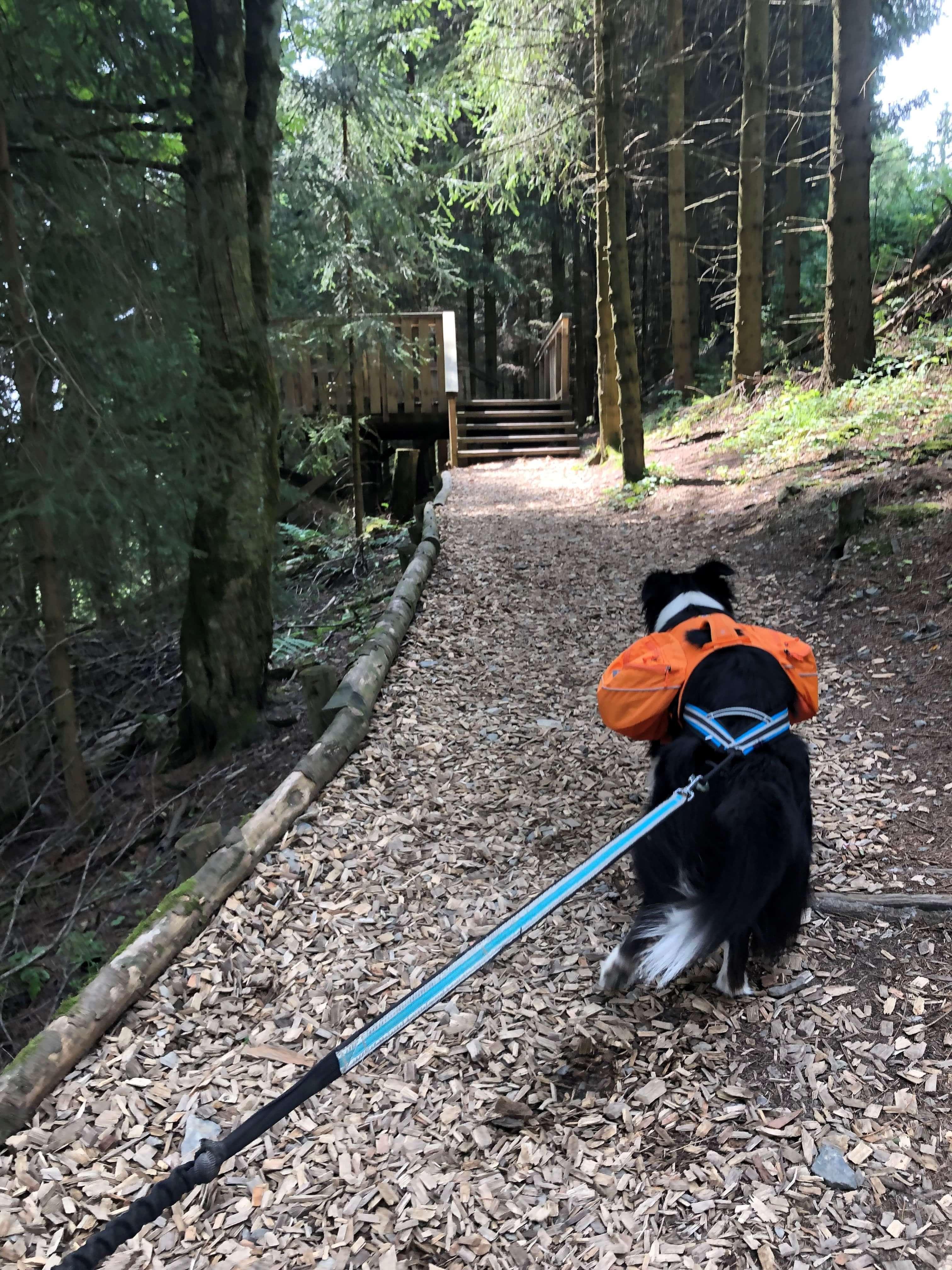 Mit der Familie und dem Hund am Erlebnisberg Kappe